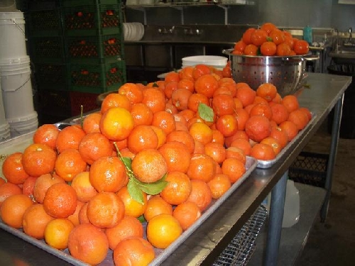 Az Red Limes on table