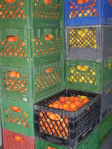 Az Red Limes and Lemons in crates